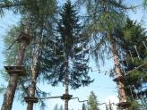 11-Von Baum zu Baum